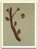 24-El arbolito, acrilici, pigmenti su tela, 70x50 cm. 2003.jpg