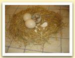 34-Nido, uova di struzzo, terracotta, paglia, dimensioni variabili 2005.jpg