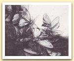 farfalle notturne - 1971.jpg
